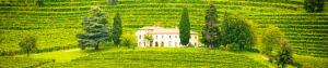 proprietes-viticoles-a-vendre
